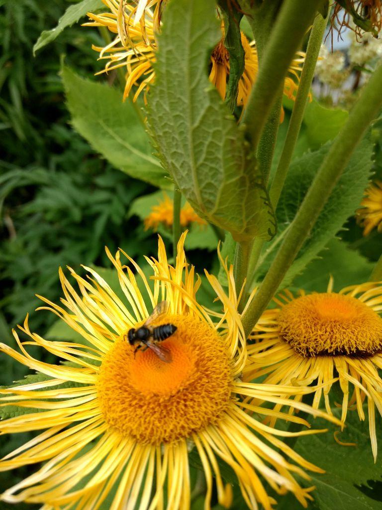 Bundesregierung lässt Bienen und Insekten im Stich